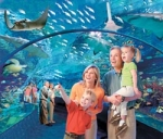 Motel 6 Gatlinburg Spring Package Ripley's Aquarium